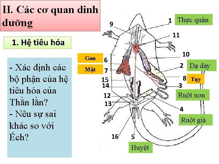 II. Các cơ quan dinh dưỡng 1 Thực quản 9 11 1. Hệ tiêu