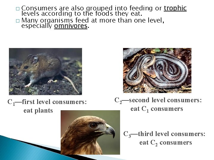 Consumers are also grouped into feeding or trophic levels according to the foods they