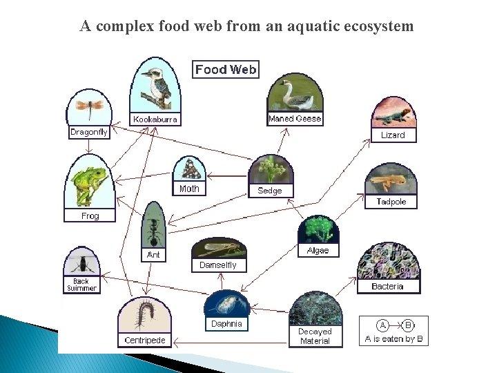 A complex food web from an aquatic ecosystem