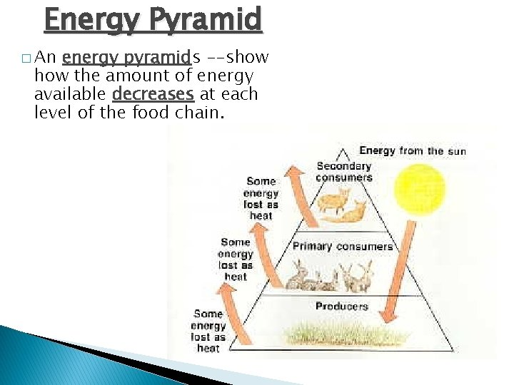 Energy Pyramid � An energy pyramids --show the amount of energy available decreases at