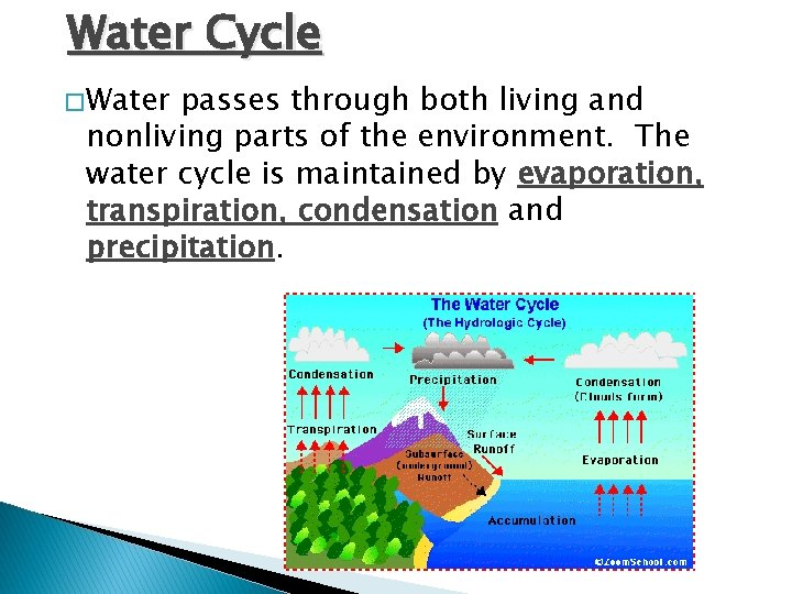 Water Cycle � Water passes through both living and nonliving parts of the environment.