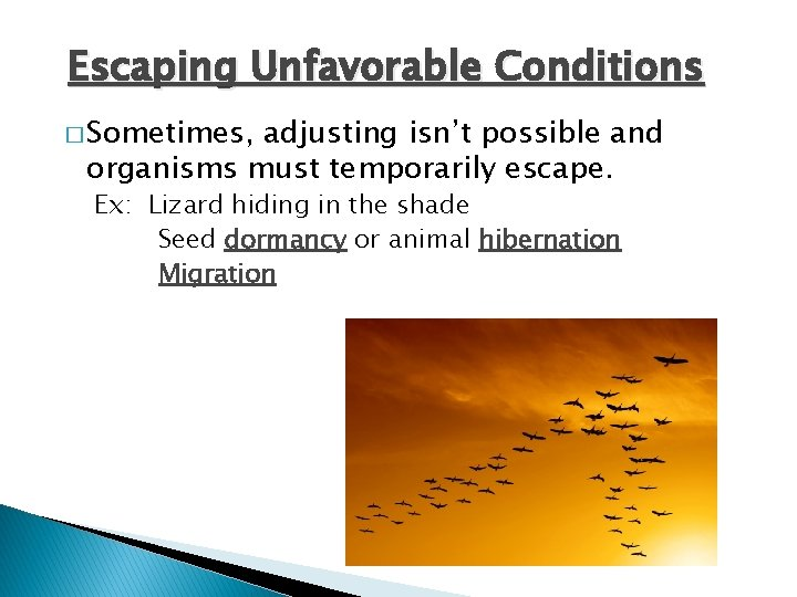 Escaping Unfavorable Conditions � Sometimes, adjusting isn't possible and organisms must temporarily escape. Ex: