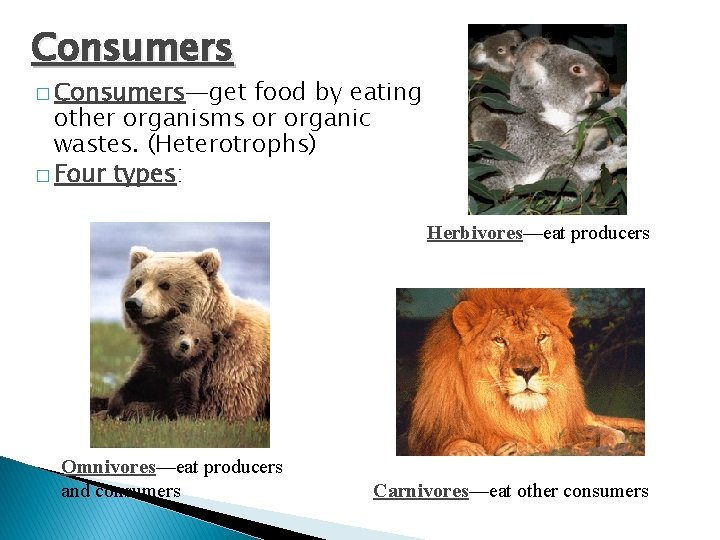 Consumers � Consumers—get food by eating other organisms or organic wastes. (Heterotrophs) � Four