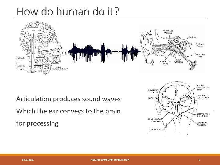 How do human do it? Articulation produces sound waves Which the ear conveys to
