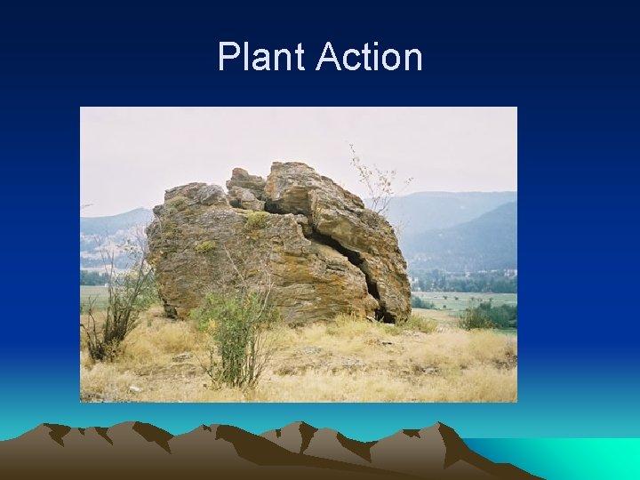 Plant Action