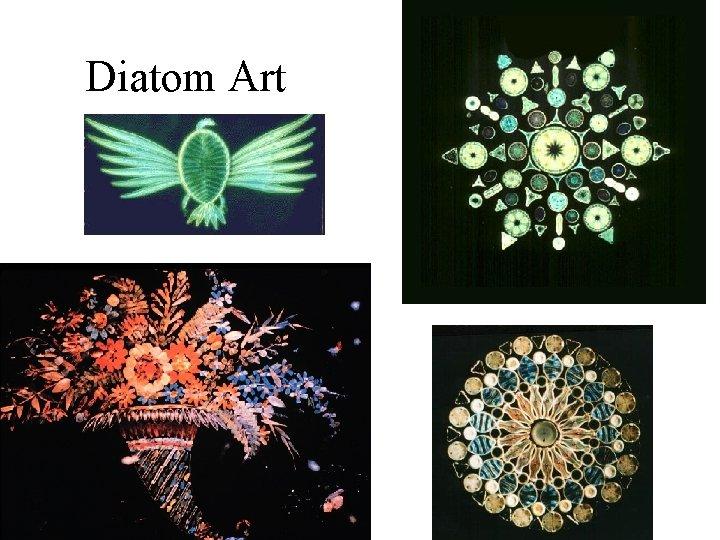 Diatom Art