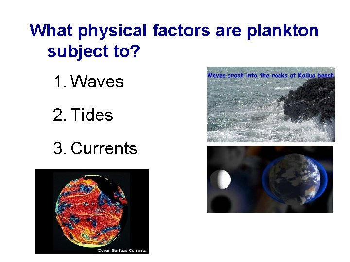 What physical factors are plankton subject to? 1. Waves 2. Tides 3. Currents