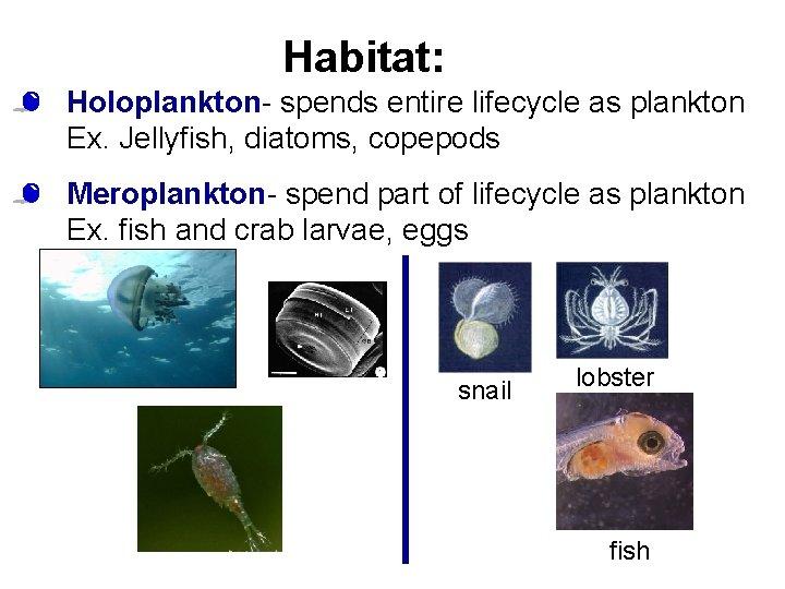 Habitat: • Holoplankton- spends entire lifecycle as plankton Ex. Jellyfish, diatoms, copepods • Meroplankton-