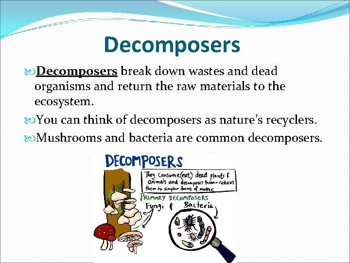 Decomposers break down wastes and dead organisms and return the raw materials to the