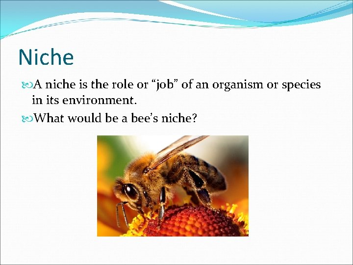 """Niche A niche is the role or """"job"""" of an organism or species in"""
