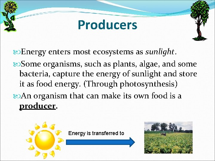 Producers Energy enters most ecosystems as sunlight. Some organisms, such as plants, algae, and