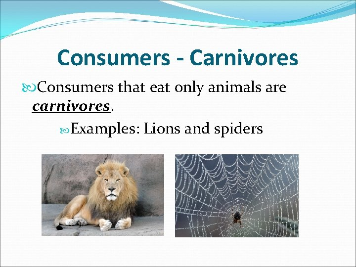Consumers - Carnivores Consumers that eat only animals are carnivores. Examples: Lions and spiders