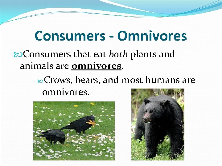 Consumers - Omnivores Consumers that eat both plants and animals are omnivores. Crows, bears,