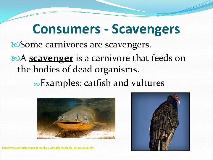 Consumers - Scavengers Some carnivores are scavengers. A scavenger is a carnivore that feeds