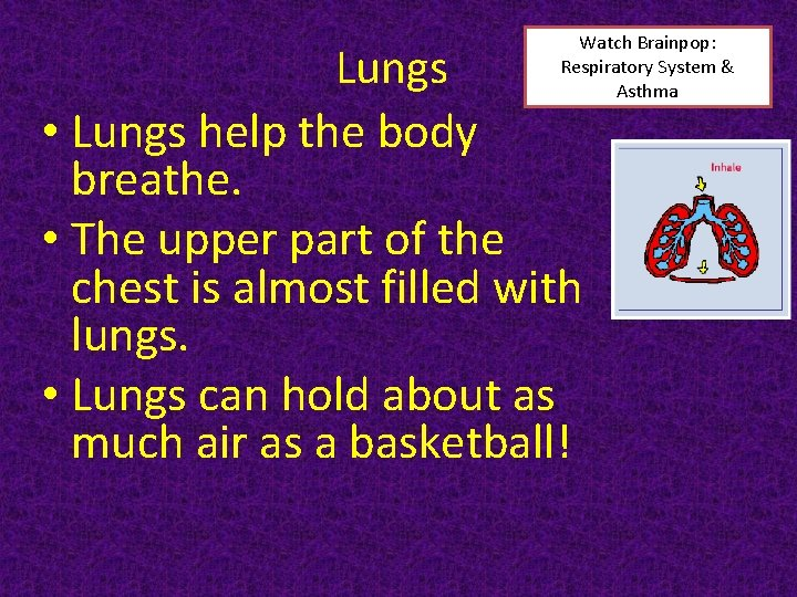 Watch Brainpop: Respiratory System & Asthma Lungs • Lungs help the body breathe. •