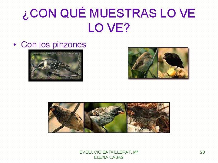 ¿CON QUÉ MUESTRAS LO VE? • Con los pinzones EVOLUCIÓ BATXILLERAT. Mª ELENA CASAS