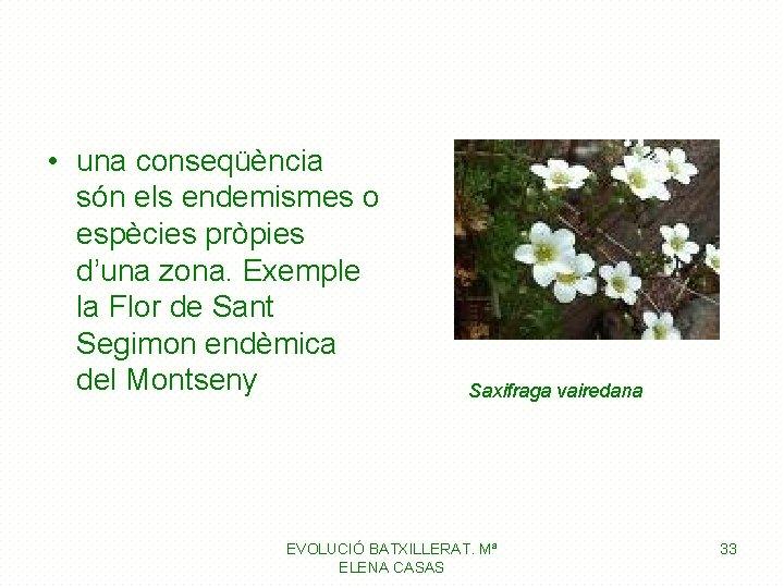 • una conseqüència són els endemismes o espècies pròpies d'una zona. Exemple la
