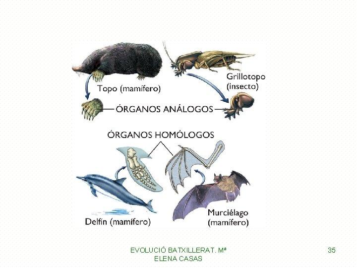 EVOLUCIÓ BATXILLERAT. Mª ELENA CASAS 35