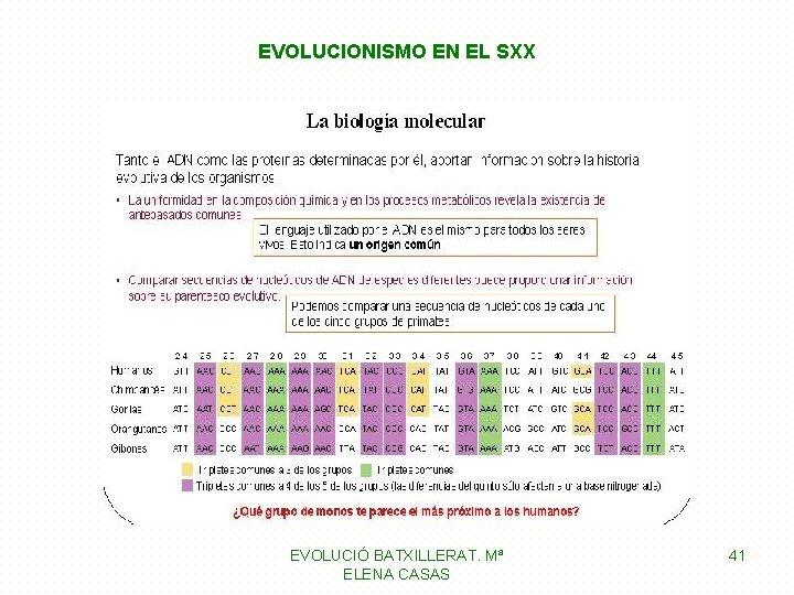 EVOLUCIONISMO EN EL SXX EVOLUCIÓ BATXILLERAT. Mª ELENA CASAS 41
