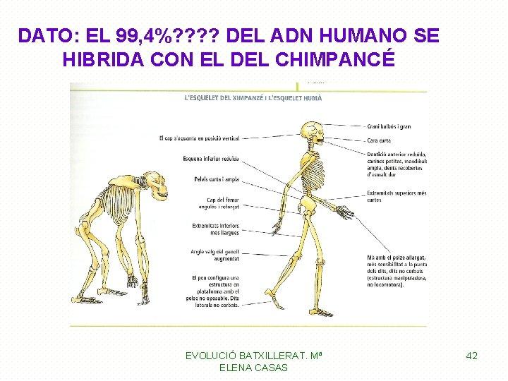 DATO: EL 99, 4%? ? DEL ADN HUMANO SE HIBRIDA CON EL DEL CHIMPANCÉ