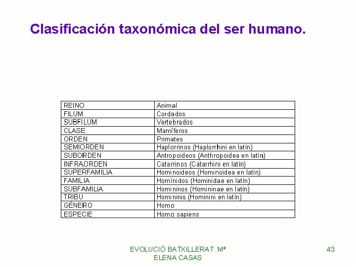 Clasificación taxonómica del ser humano. EVOLUCIÓ BATXILLERAT. Mª ELENA CASAS 43