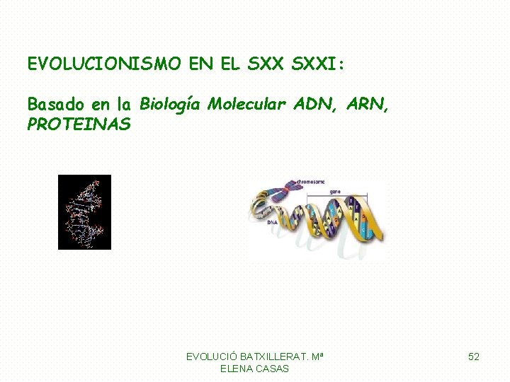 EVOLUCIONISMO EN EL SXXI: Basado en la Biología Molecular ADN, ARN, PROTEINAS EVOLUCIÓ BATXILLERAT.