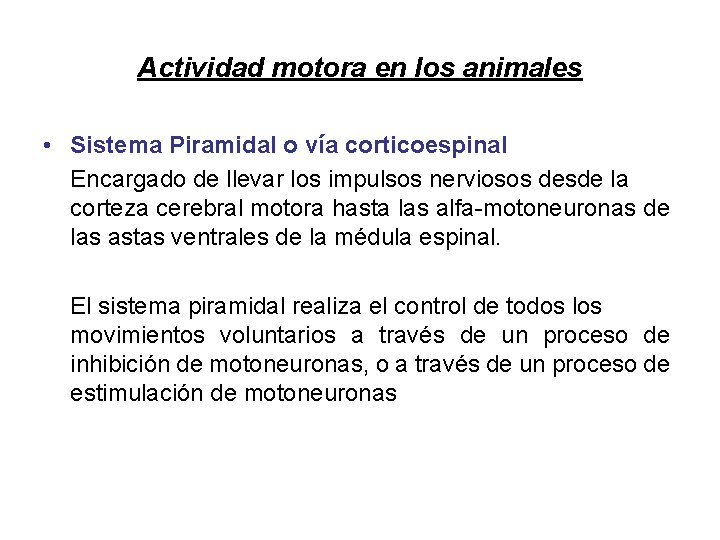 Actividad motora en los animales • Sistema Piramidal o vía corticoespinal Encargado de llevar