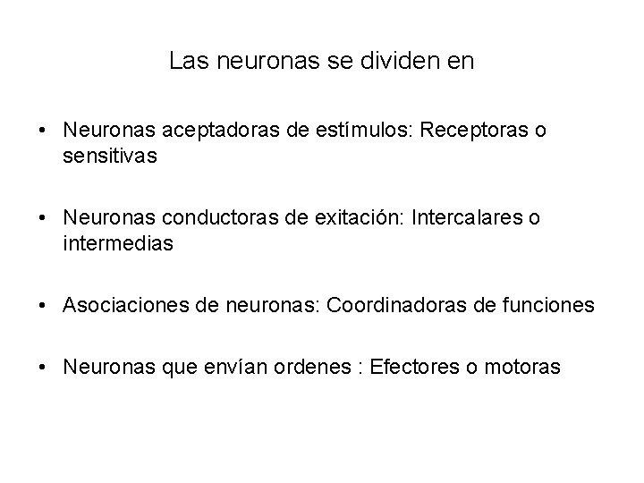 Las neuronas se dividen en • Neuronas aceptadoras de estímulos: Receptoras o sensitivas •