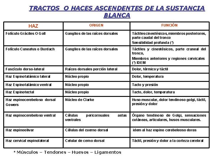 TRACTOS O HACES ASCENDENTES DE LA SUSTANCIA BLANCA ORIGEN HAZ FUNCIÓN Folículo Gráciles O