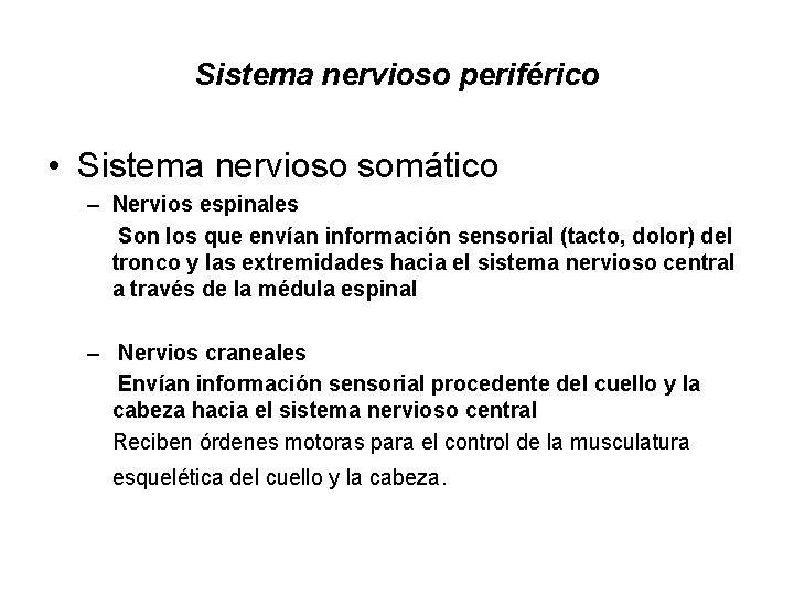 Sistema nervioso periférico • Sistema nervioso somático – Nervios espinales Son los que envían