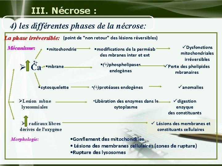 III. Nécrose : 4) les différentes phases de la nécrose: La phase irréversible: Mécanisme: