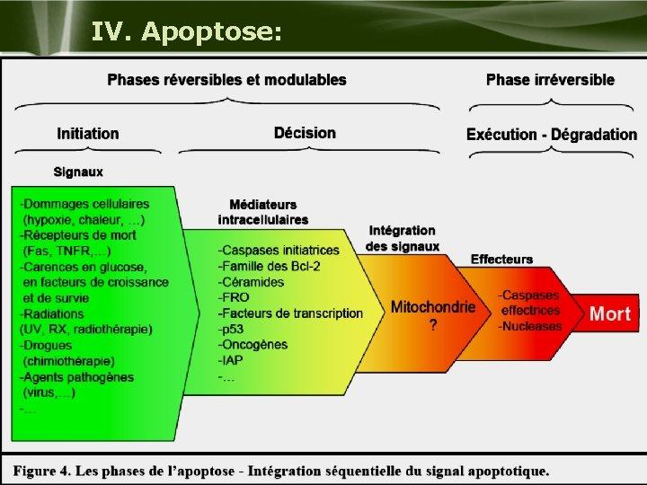 IV. Apoptose: Company Logo