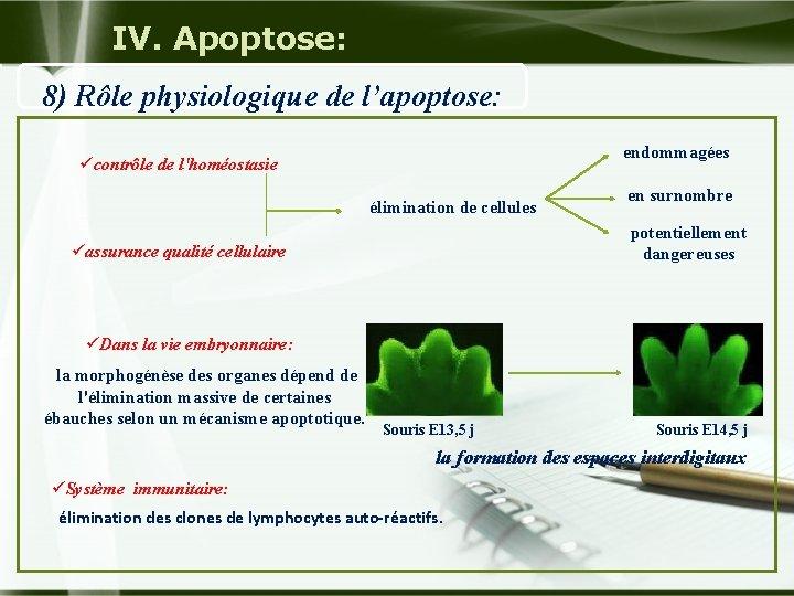 IV. Apoptose: 8) Rôle physiologique de l'apoptose: endommagées ücontrôle de l'homéostasie élimination de cellules