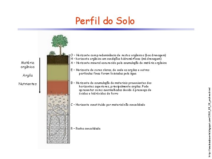 Perfil do Solo Argila Nutrientes E – Horizonte de cores claras, de onde as