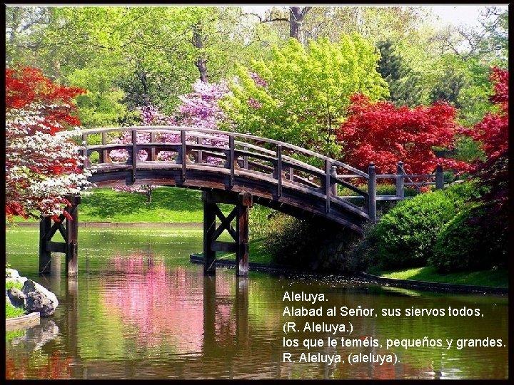 Aleluya. Alabad al Señor, sus siervos todos, (R. Aleluya. ) los que le teméis,