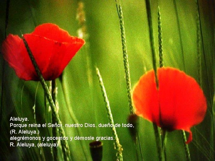 Aleluya. Porque reina el Señor, nuestro Dios, dueño de todo, (R. Aleluya. ) alegrémonos