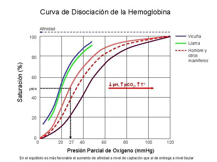 Curva de Disociación de la Hemoglobina Afinidad Vicuña 100 Llama Hombre y otros mamíferos