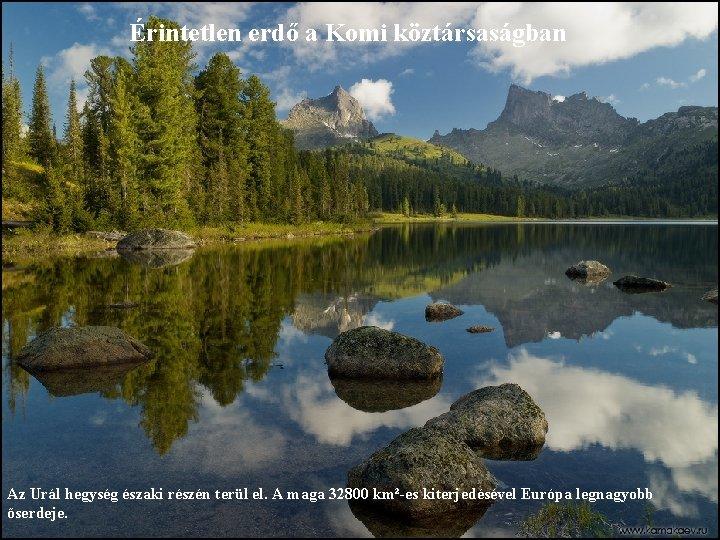 Érintetlen erdő a Komi köztársaságban Az Urál hegység északi részén terül el. A maga