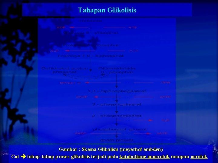 Tahapan Glikolisis Gambar : Skema Glikolisis (meyerhof embden) Cat tahap-tahap proses glikolisis terjadi pada