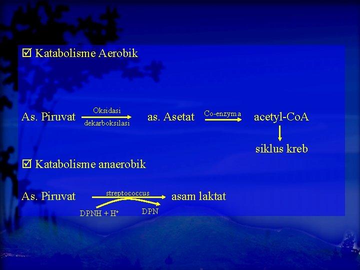 Katabolisme Aerobik As. Piruvat Oksidasi as. Asetat dekarboksilasi Co-enzyma acetyl-Co. A siklus kreb