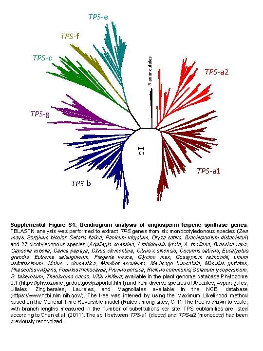 TPS-e TPS-f Ranunculales TPS-c TPS-a 2 TPS-g 0. 1 TPS-a 1 TPS-b Supplemental Figure