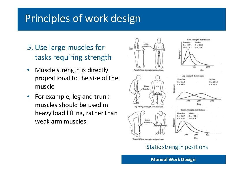 Principles of work design 5. Use large muscles for tasks requiring strength • Muscle