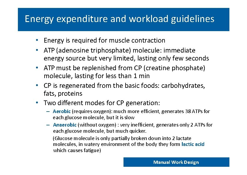 Energy expenditure and workload guidelines • Energy is required for muscle contraction • ATP