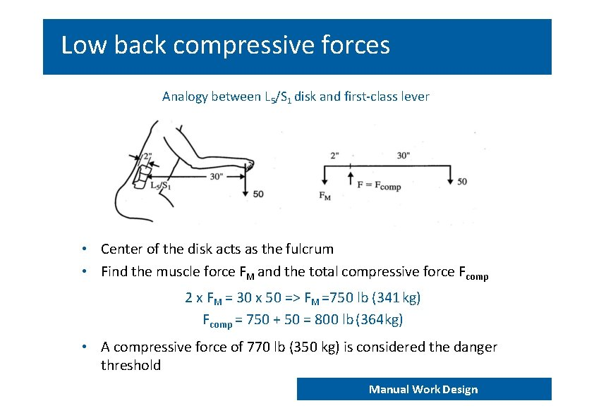 Low back compressive forces Analogy between L 5/S 1 disk and first‐class lever •