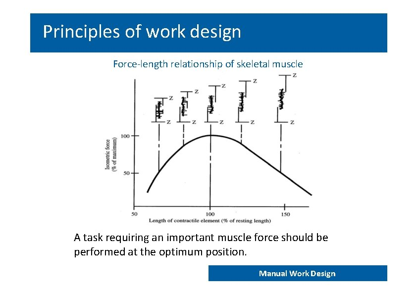 Principles of work design Force‐length relationship of skeletal muscle A task requiring an important