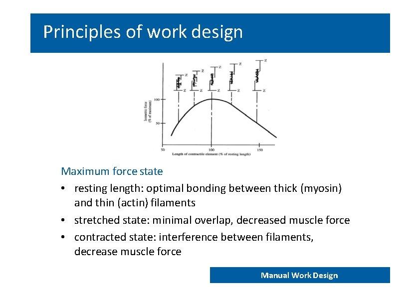 Principles of work design Maximum force state • resting length: optimal bonding between thick