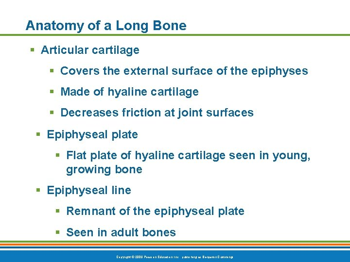Anatomy of a Long Bone § Articular cartilage § Covers the external surface of