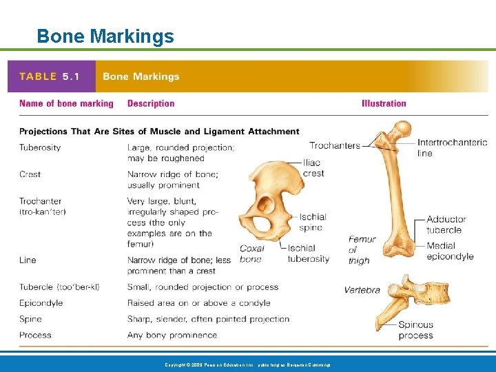 Bone Markings Table 5. 1 (1 of 2) Copyright © 2009 Pearson Education, Inc.