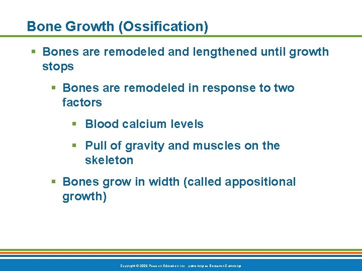 Bone Growth (Ossification) § Bones are remodeled and lengthened until growth stops § Bones