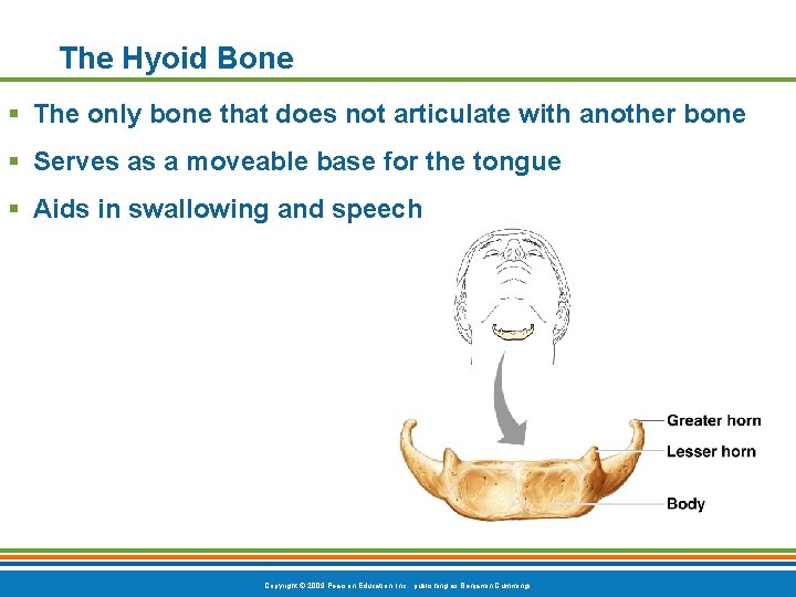 The Hyoid Bone § The only bone that does not articulate with another bone